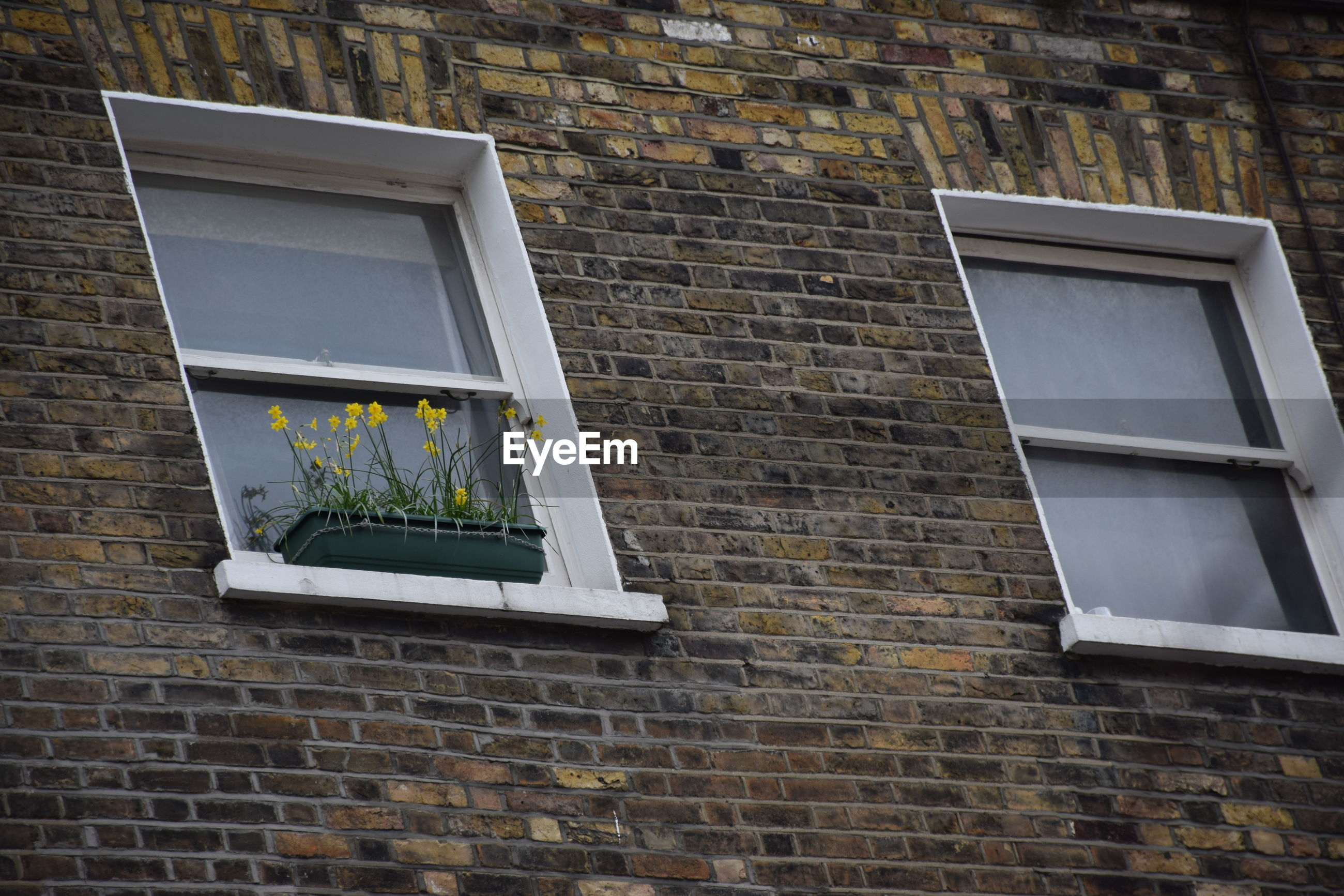 Low angle view of flower pot on window