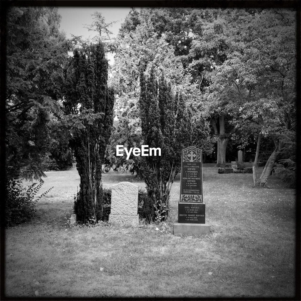 tree, cemetery, tombstone, memorial, gravestone, grass, graveyard, nature, day, no people, outdoors, grave, tranquility, growth