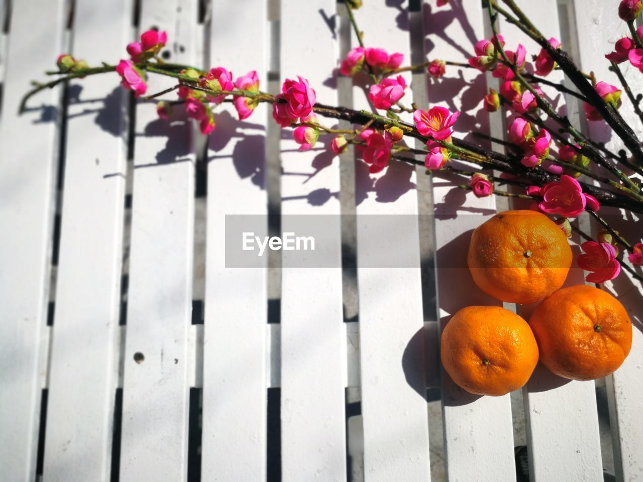 food, food and drink, freshness, healthy eating, fruit, orange color, no people, flower, plant, wood - material, nature, flowering plant, wellbeing, citrus fruit, close-up, growth, outdoors, orange, day, orange - fruit, ripe