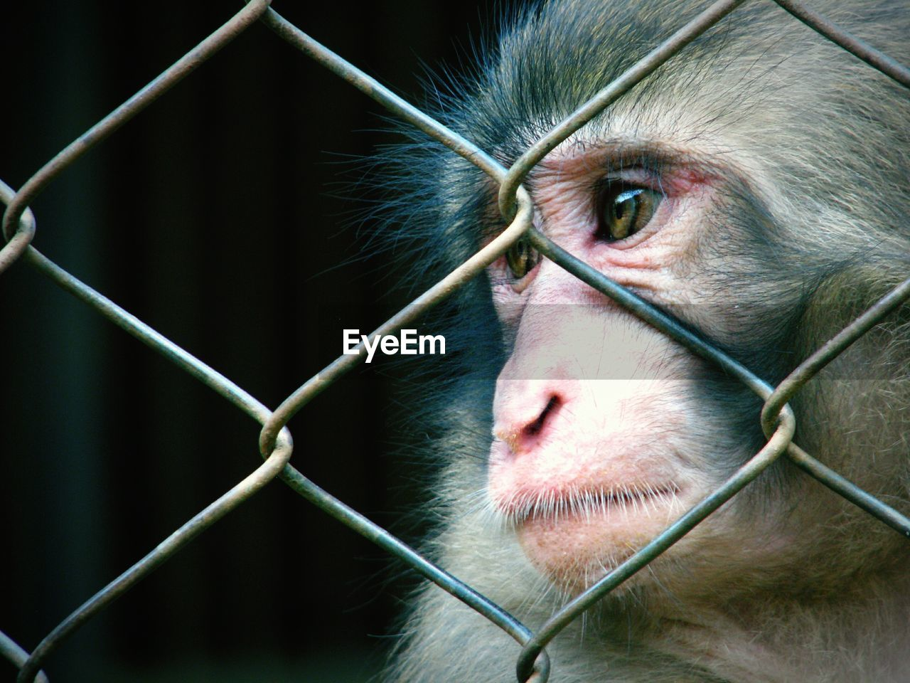 CLOSE-UP OF MONKEY AT CAGE