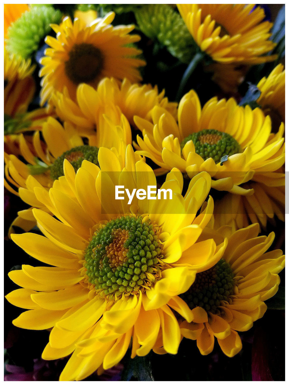 flower, petal, beauty in nature, fragility, yellow, nature, flower head, freshness, growth, sunflower, plant, no people, close-up, blooming, outdoors, day