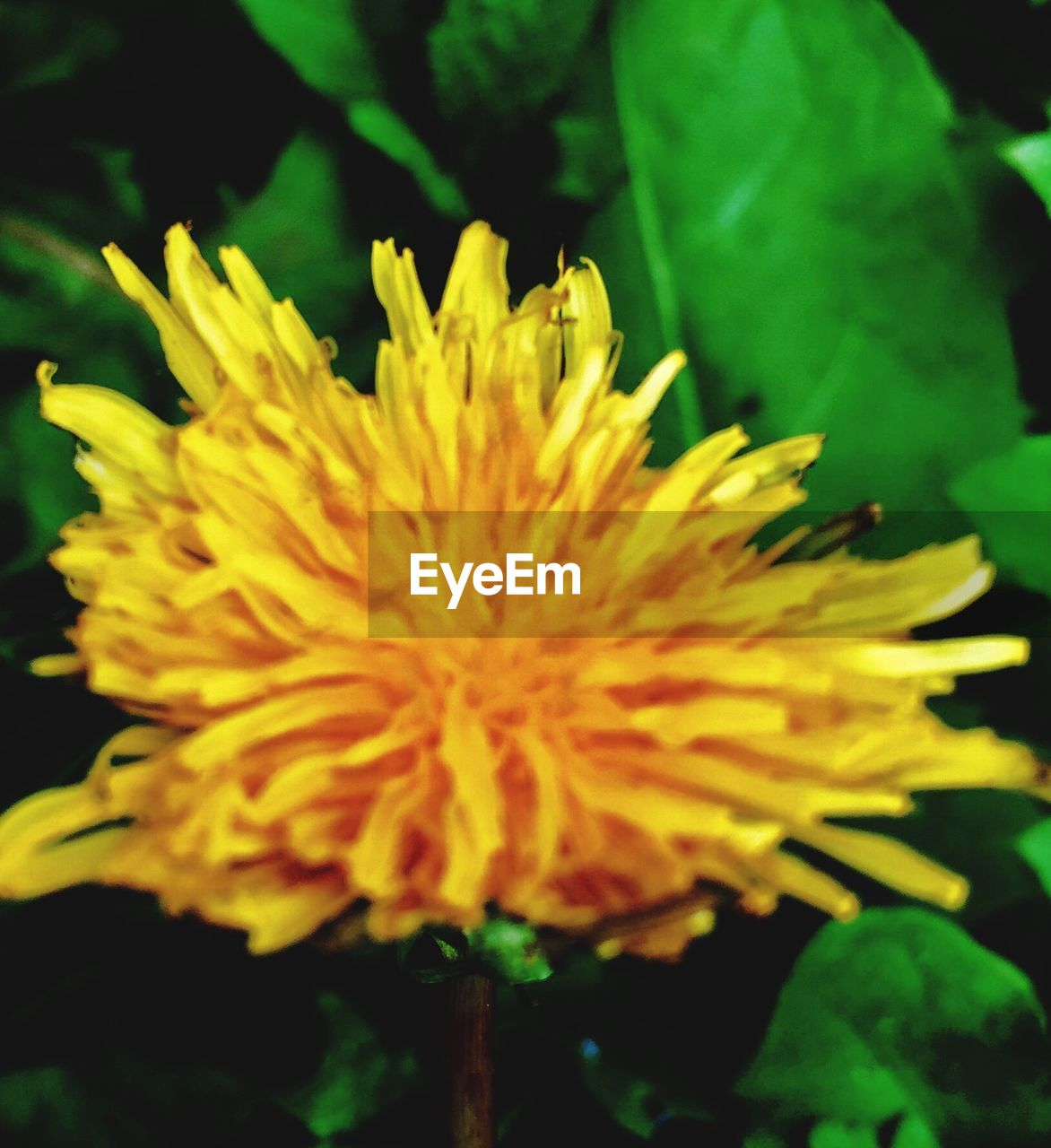 flower, growth, nature, fragility, beauty in nature, freshness, petal, plant, flower head, outdoors, yellow, close-up, no people, day, soft focus, springtime, blooming