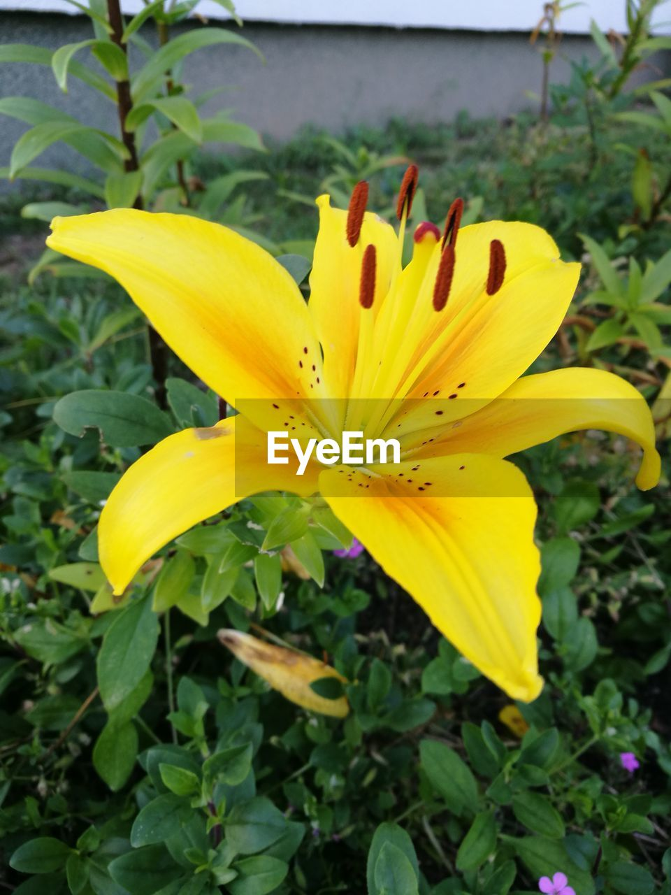 flower, petal, yellow, growth, flower head, fragility, beauty in nature, plant, freshness, nature, outdoors, day, close-up, day lily, no people, leaf, blooming