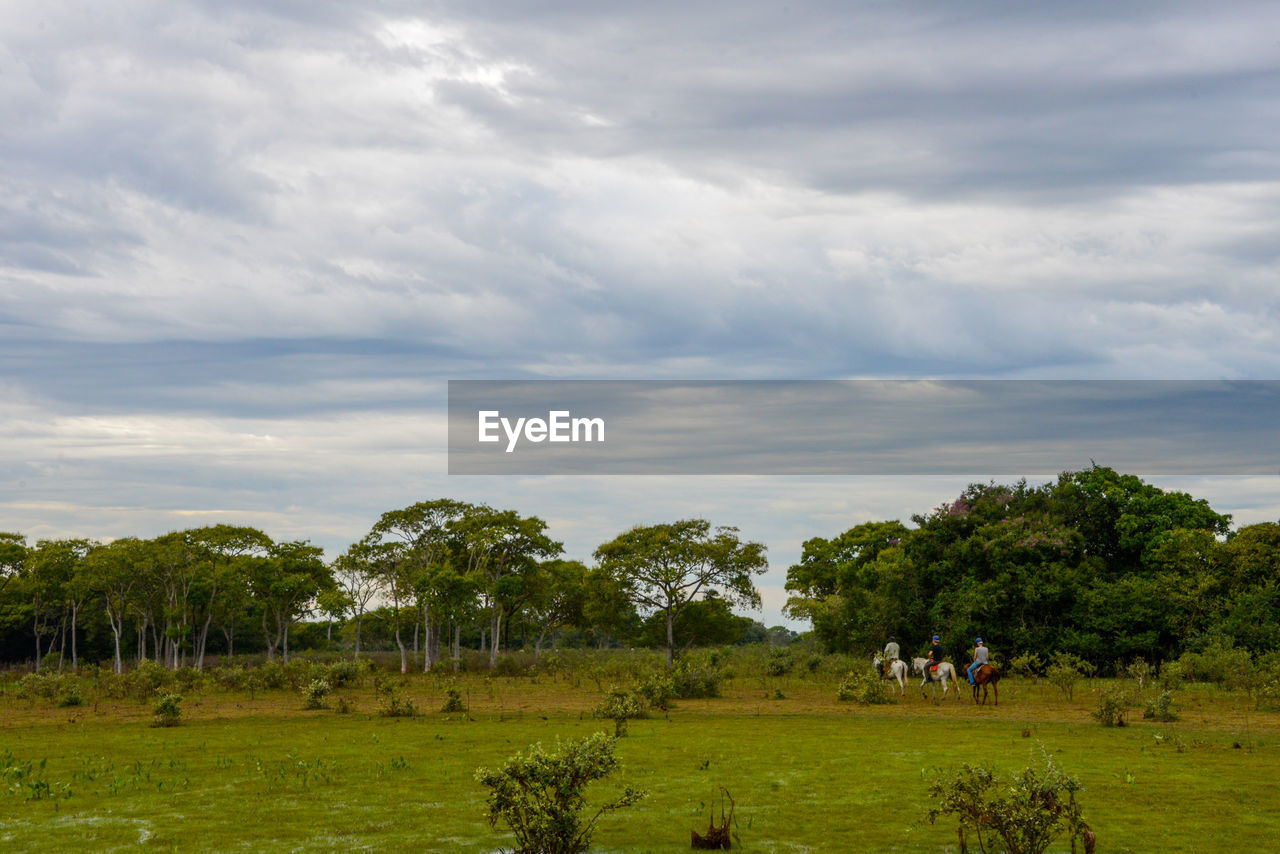 plant, cloud - sky, sky, tree, environment, landscape, land, grass, field, nature, beauty in nature, day, tranquility, green color, scenics - nature, non-urban scene, growth, outdoors, tranquil scene, animal