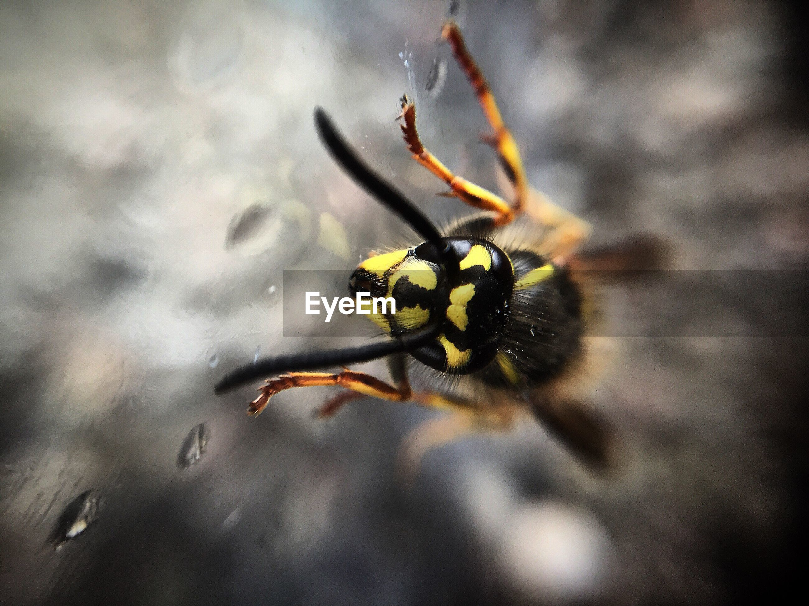 Close-up of wasp on wet glass