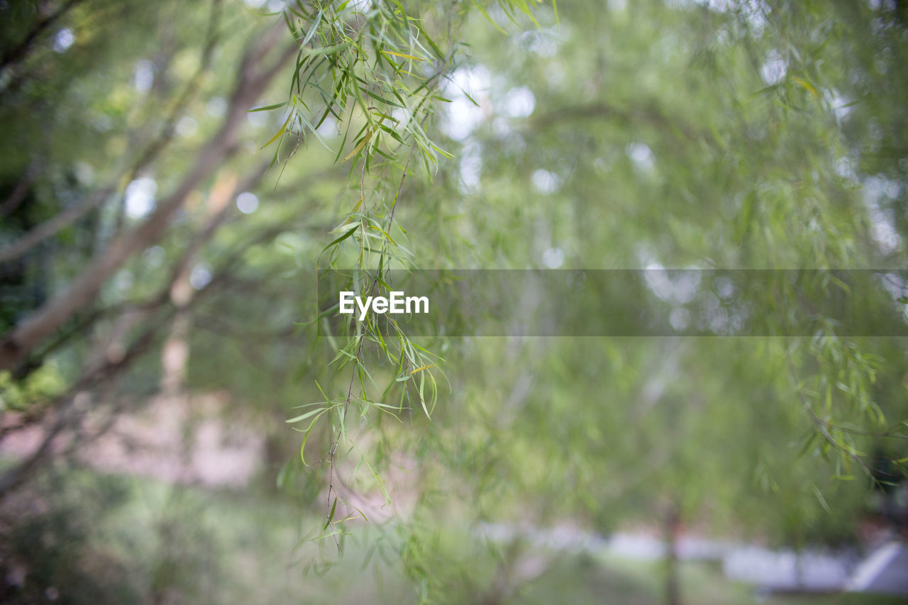 nature, growth, plant, no people, day, tree, outdoors, tranquility, beauty in nature, branch, freshness, fragility, close-up