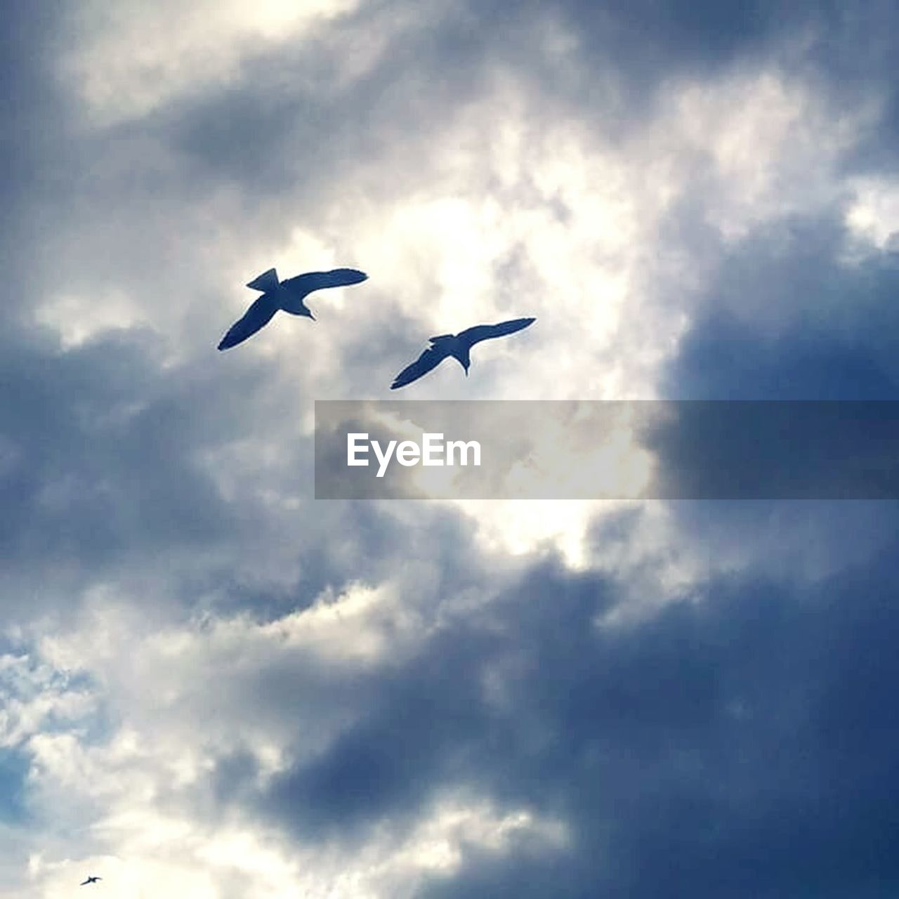 flying, cloud - sky, bird, animals in the wild, spread wings, low angle view, animal themes, one animal, mid-air, day, sky, no people, animal wildlife, nature, outdoors, beauty in nature
