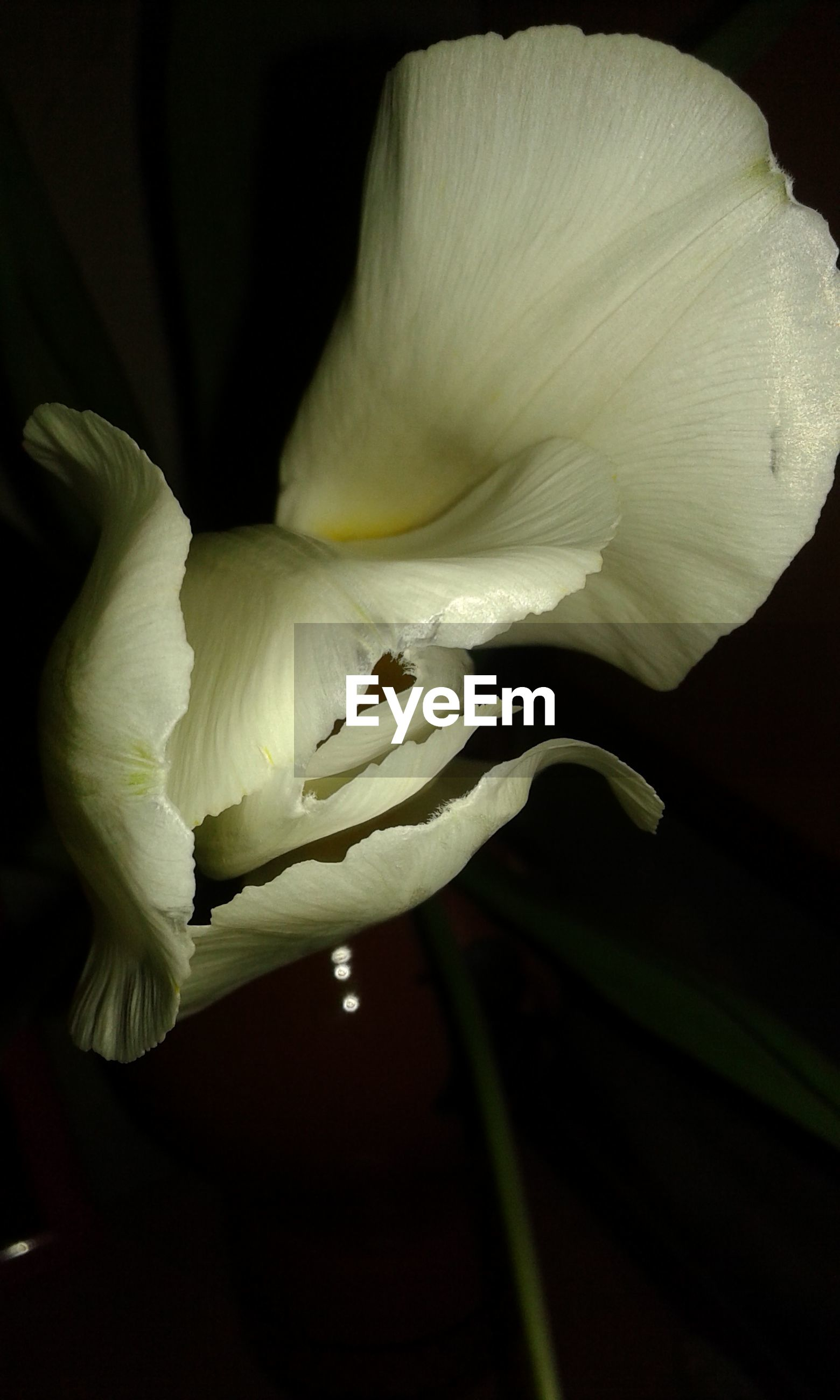 flower, beauty in nature, petal, freshness, fragility, growth, nature, flower head, close-up, blossom, plant, day lily, outdoors, no people, pistil, day