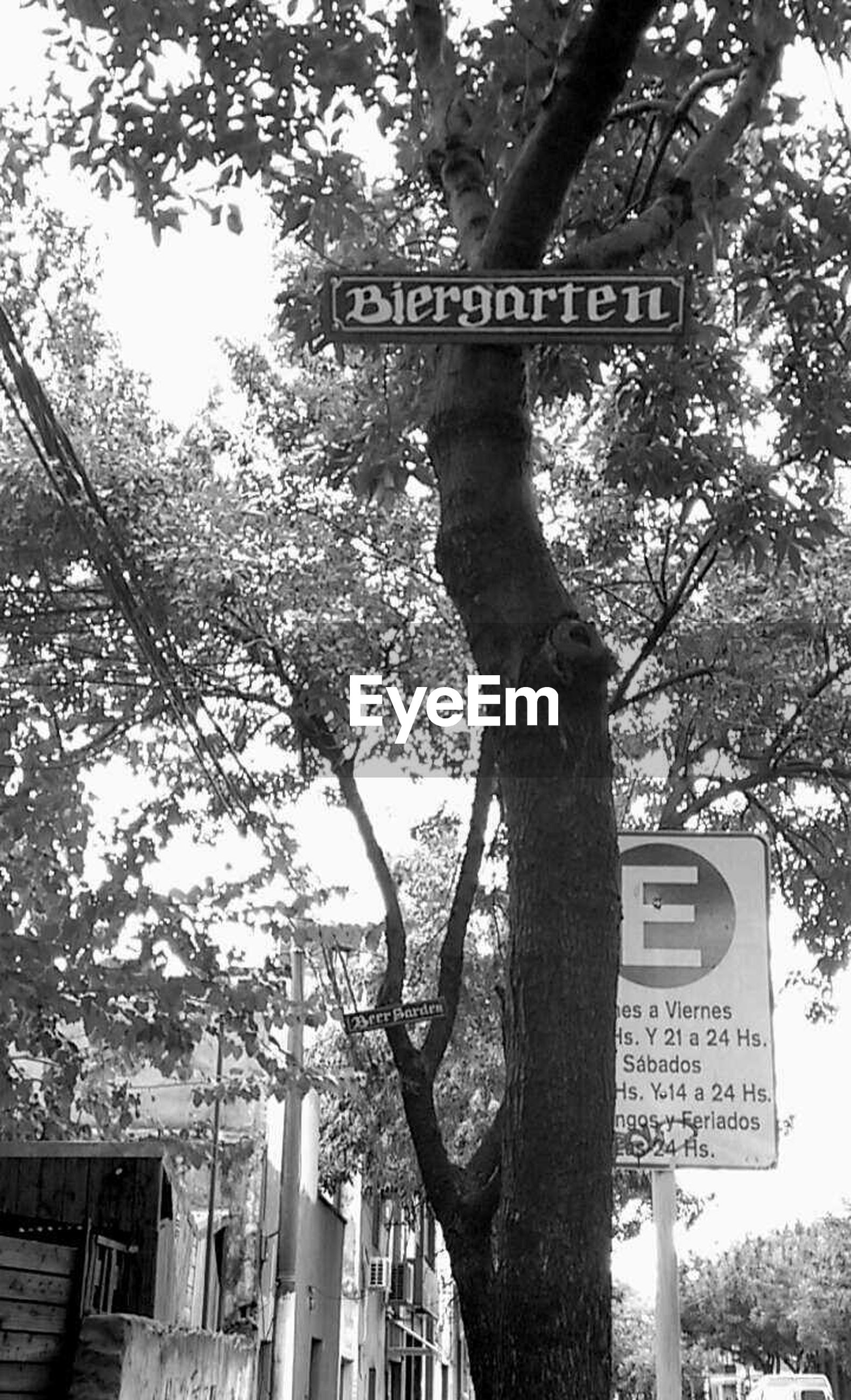 tree, text, communication, western script, low angle view, information sign, road sign, sign, non-western script, branch, guidance, information, directional sign, capital letter, tree trunk, arrow symbol, day, growth, building exterior, built structure