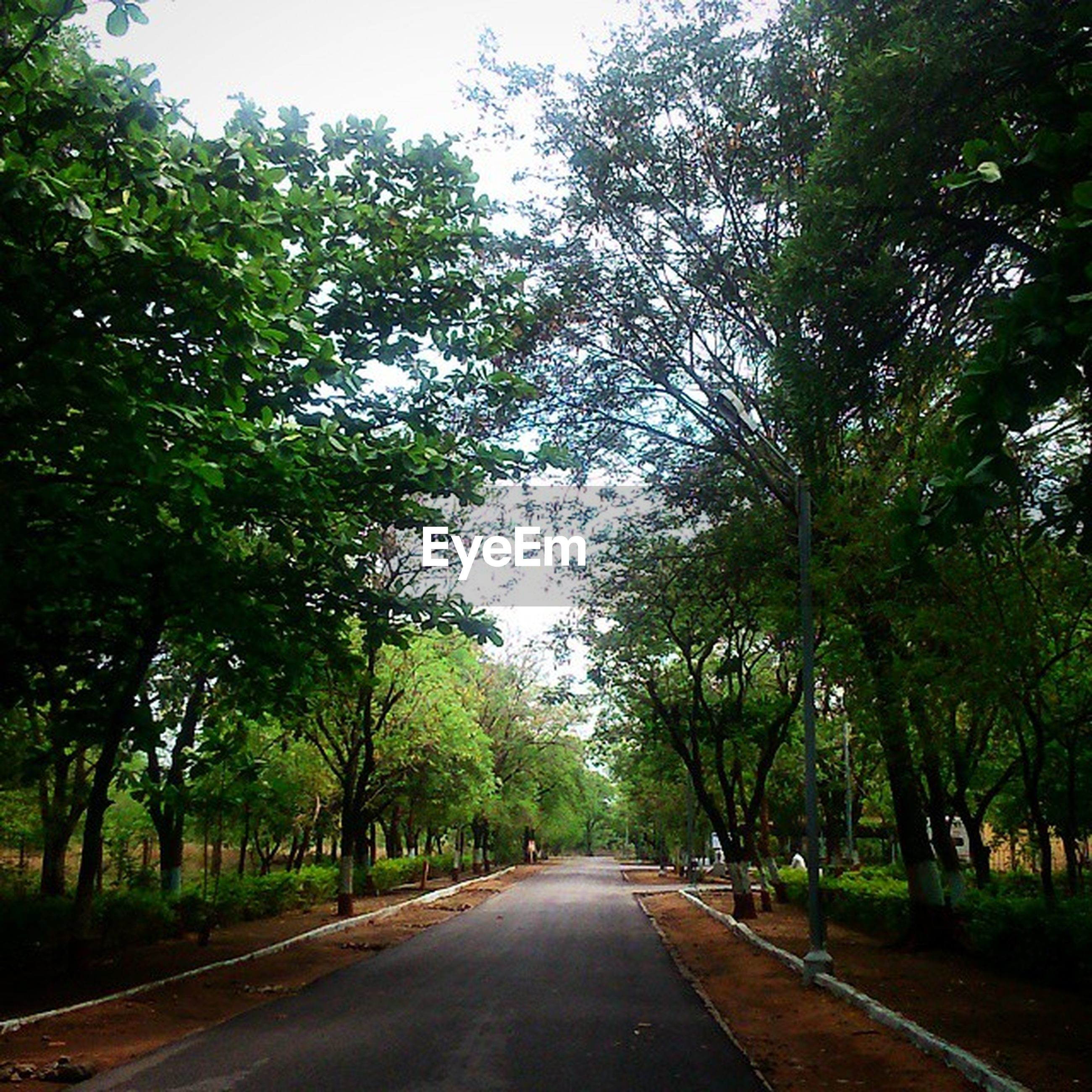 the way forward, tree, road, transportation, diminishing perspective, vanishing point, road marking, empty road, growth, tranquility, street, treelined, country road, nature, empty, green color, asphalt, long, tranquil scene, day