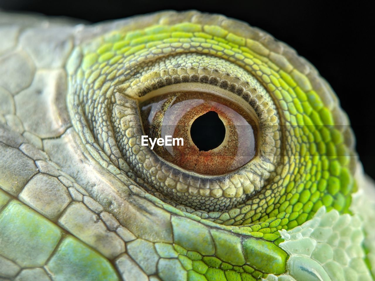 CLOSE-UP OF A REPTILE