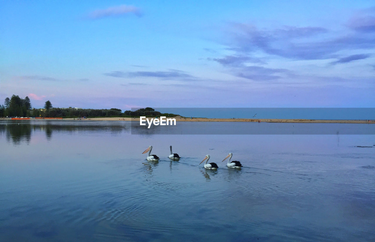 Pelicans Swimming On Lake Against Sky