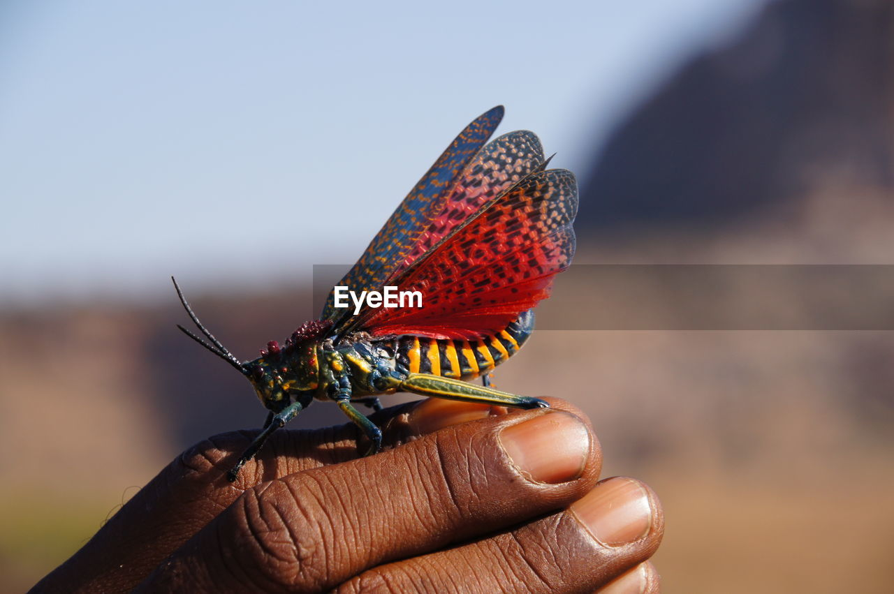 human hand, insect, animals in the wild, human body part, hand, animal wildlife, invertebrate, one animal, one person, focus on foreground, real people, close-up, day, finger, human finger, animal wing, unrecognizable person, body part, outdoors, butterfly - insect