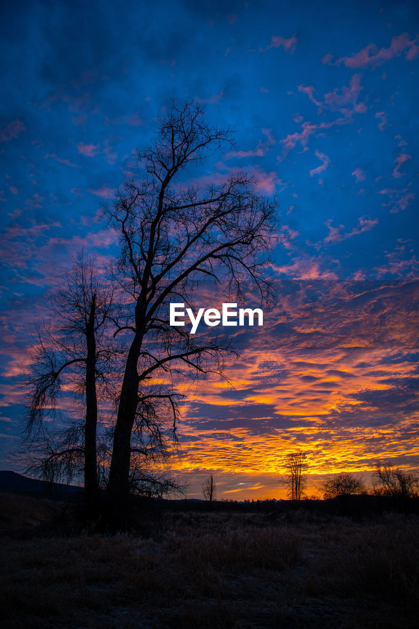 sky, tree, cloud - sky, beauty in nature, sunset, scenics - nature, tranquil scene, tranquility, silhouette, plant, bare tree, nature, no people, land, non-urban scene, field, orange color, landscape, environment, idyllic, outdoors