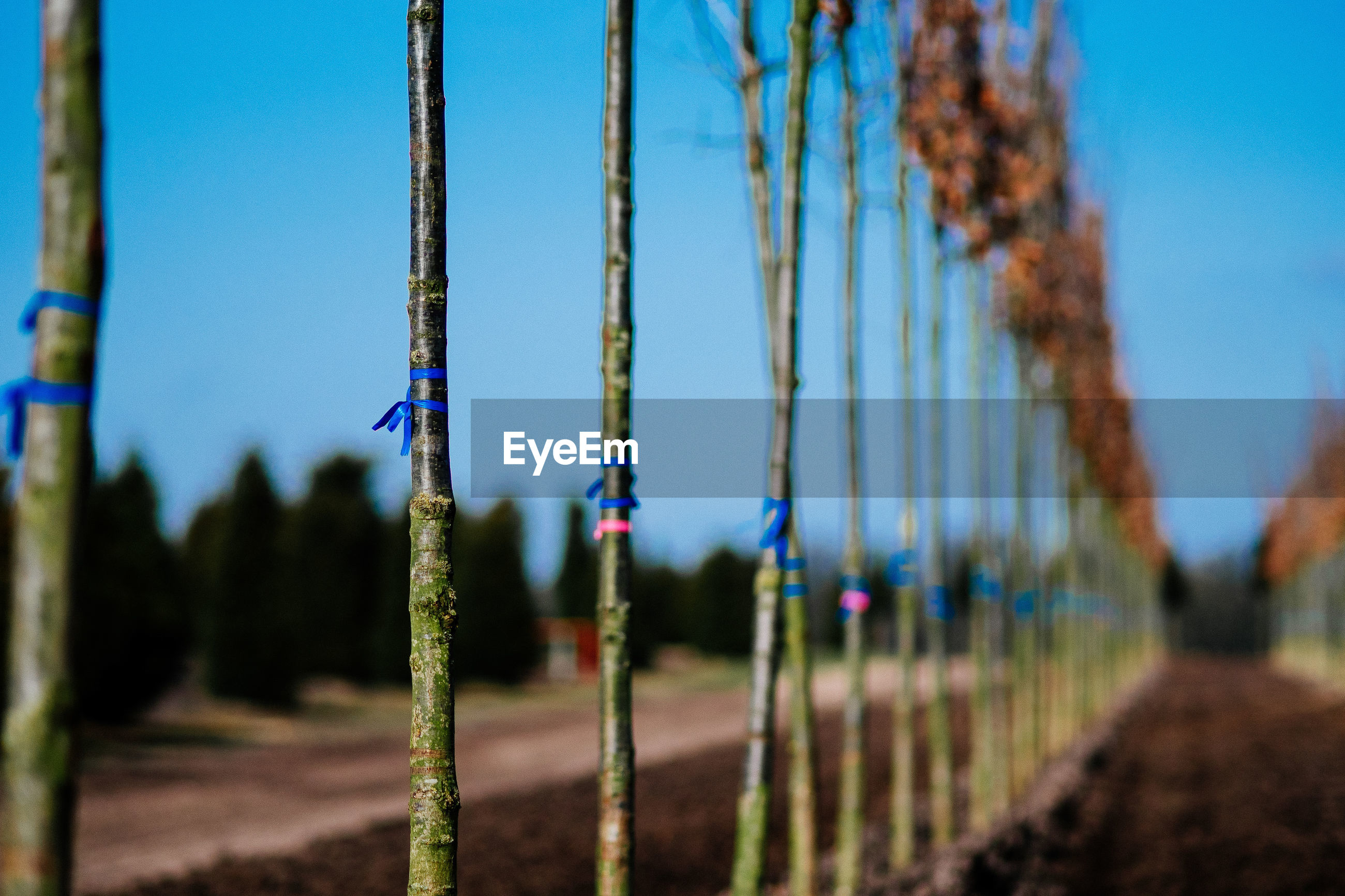 Close-up of trees at plant nursery