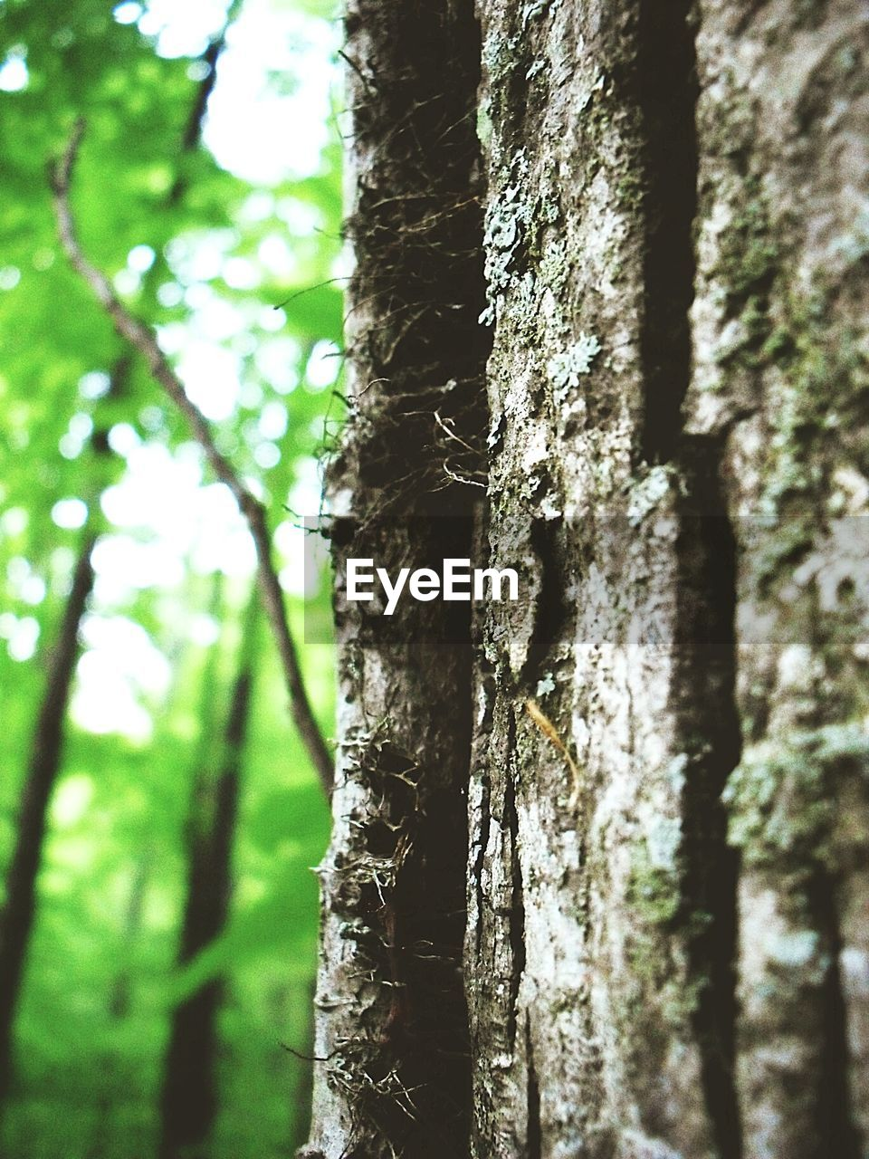 tree trunk, tree, forest, nature, day, growth, focus on foreground, no people, outdoors, close-up, beauty in nature, bark, textured