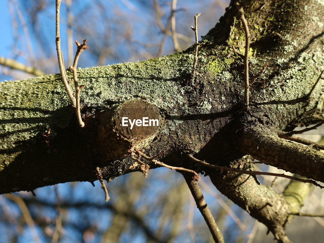 tree, branch, day, outdoors, no people, close-up, low angle view, nature, focus on foreground, tree trunk, growth, sunlight, sky, animal themes