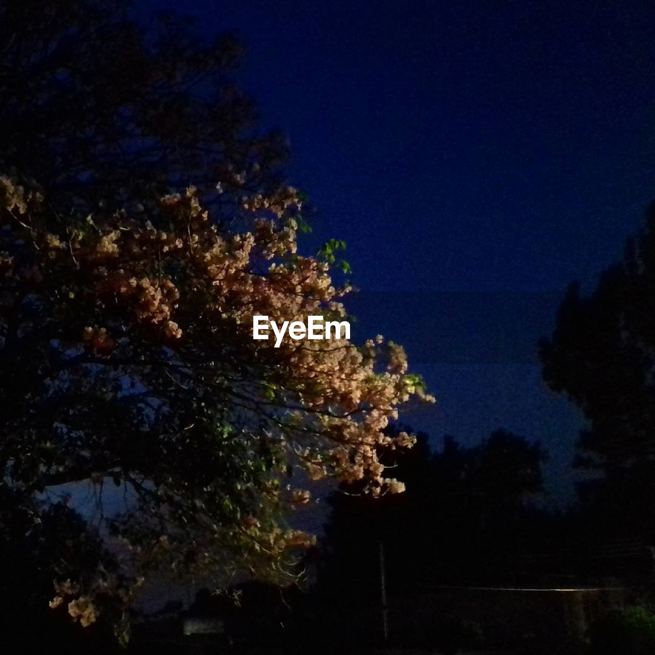 tree, nature, beauty in nature, no people, night, growth, tranquility, scenics, blue, low angle view, sky, outdoors, freshness