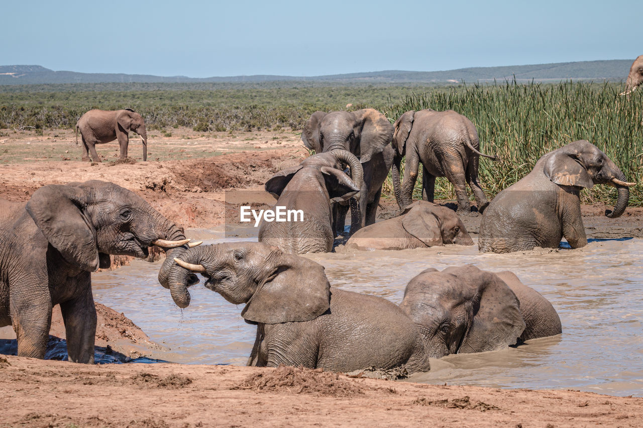 VIEW OF ELEPHANT ON LAND AGAINST SKY