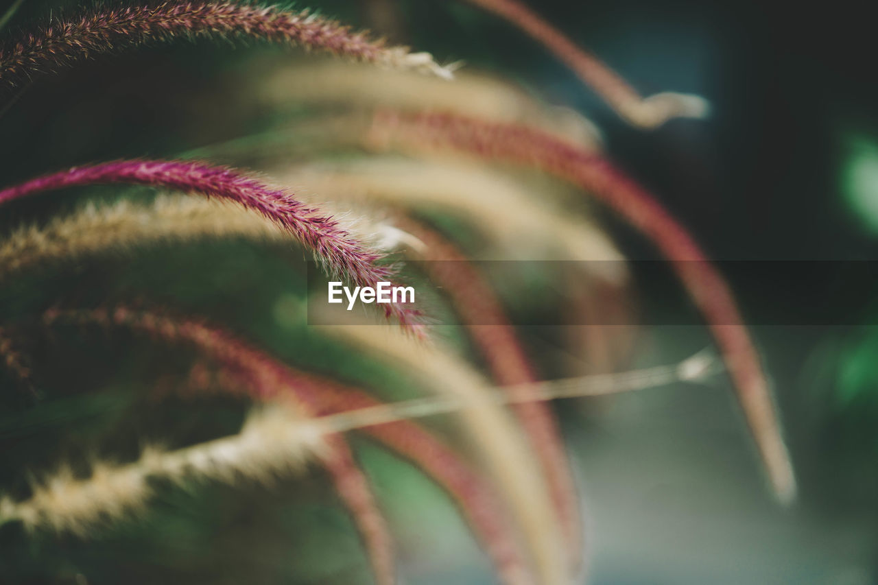 close-up, selective focus, no people, green color, growth, plant, beauty in nature, indoors, pattern, leaf, plant part, day, art and craft, flower, nature, fragility, flowering plant, vulnerability, focus on foreground