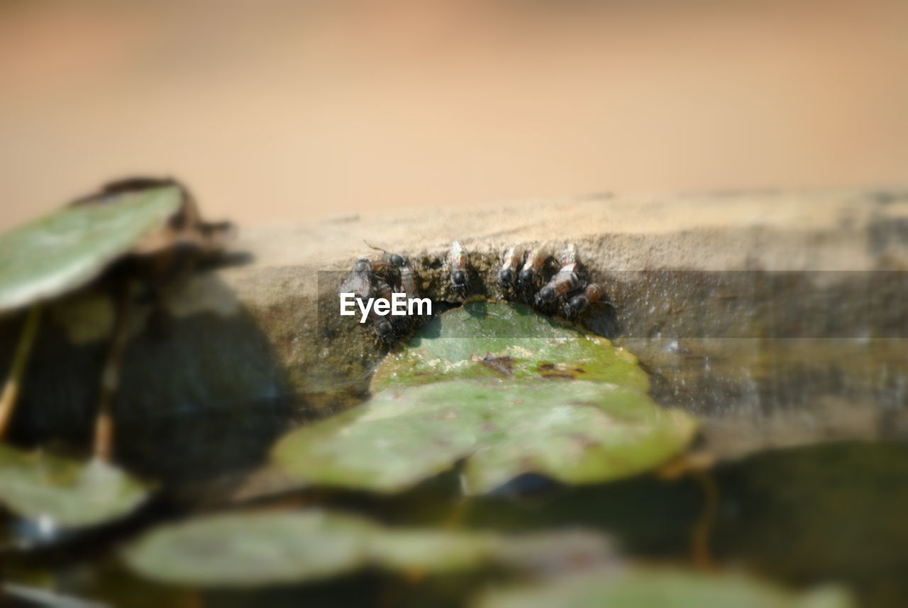 selective focus, no people, nature, animals in the wild, outdoors, insect, close-up, animal wildlife, animal themes, day, one animal