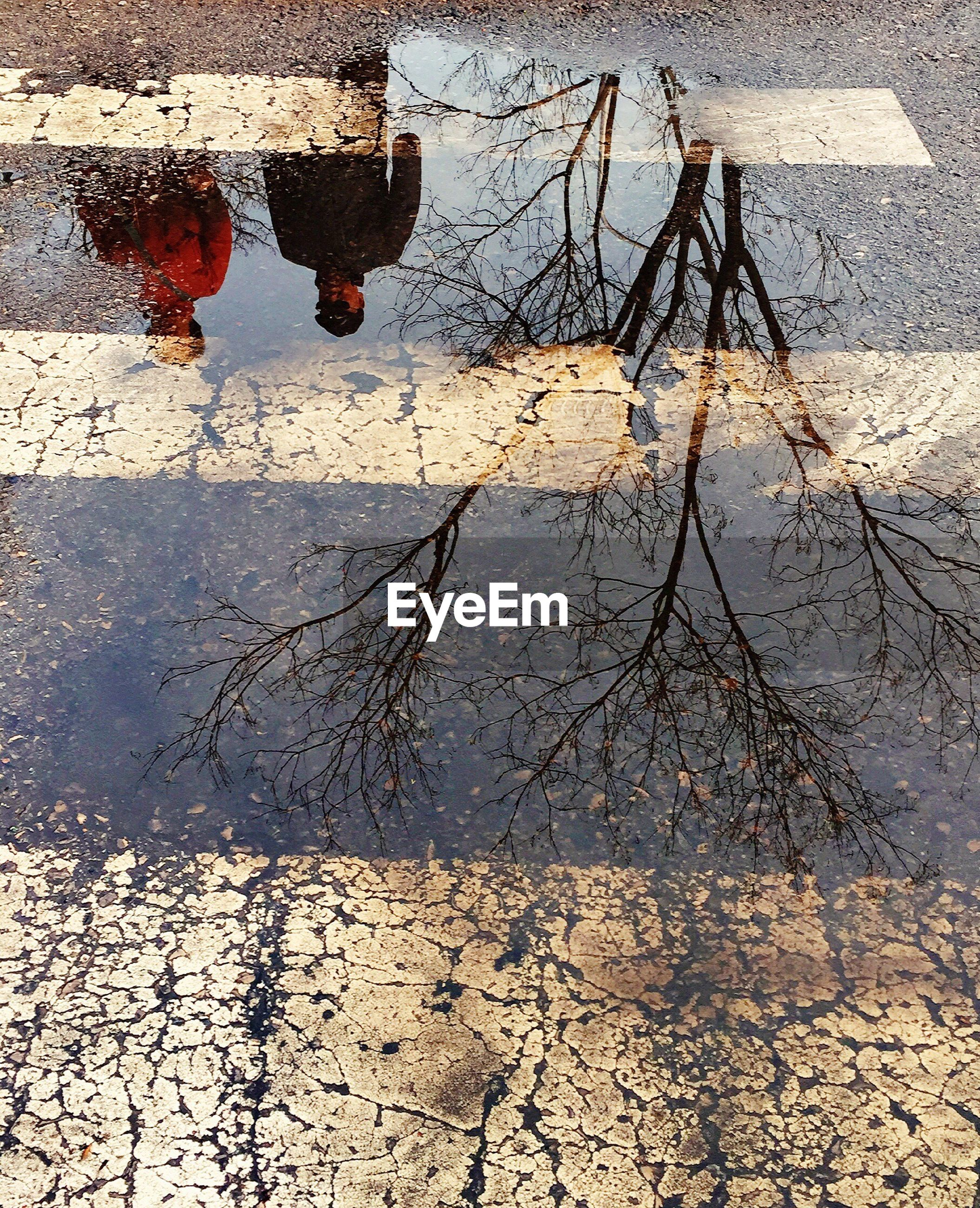 reflection, water, puddle, day, outdoors, no people, nature, branch, tree