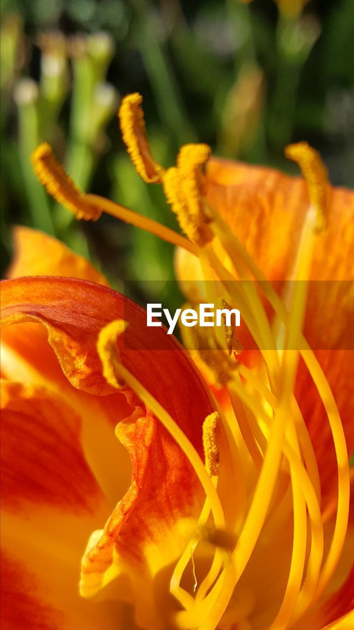 flower, petal, beauty in nature, growth, nature, flower head, fragility, no people, freshness, close-up, plant, yellow, stamen, day lily, blooming, outdoors, day
