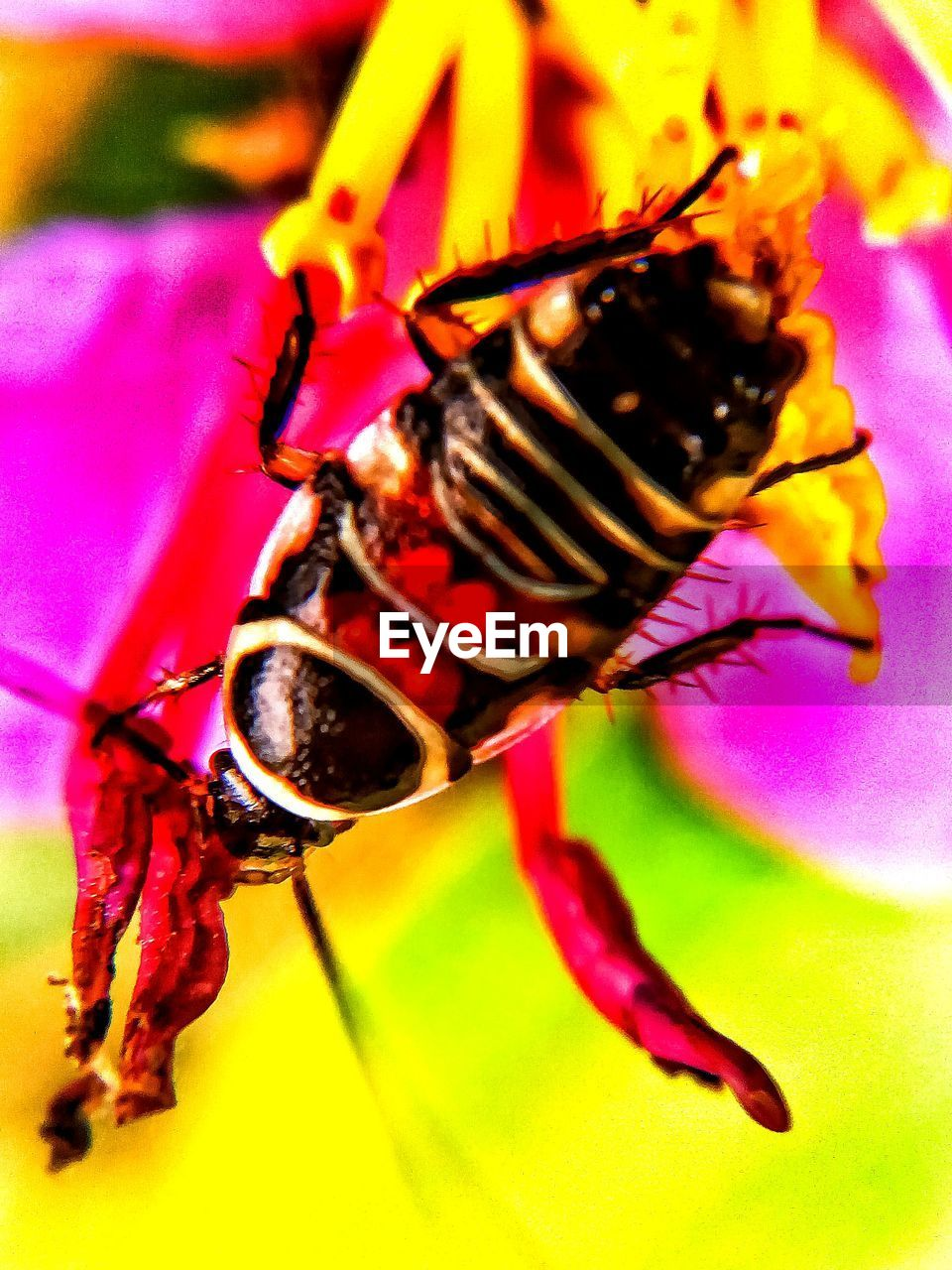 insect, animal themes, close-up, animals in the wild, one animal, no people, focus on foreground, animal wildlife, outdoors, nature, day
