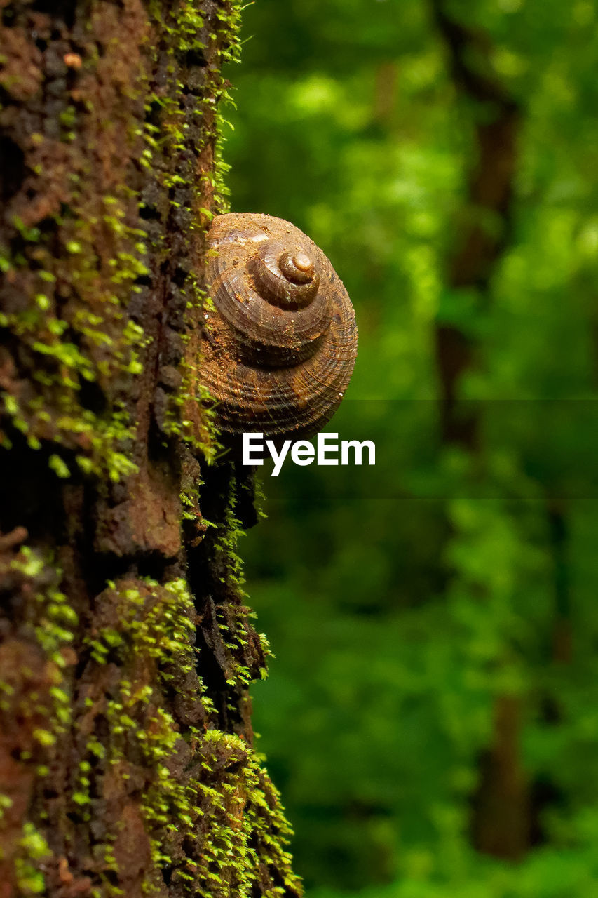 tree, plant, focus on foreground, close-up, no people, growth, spiral, mollusk, gastropod, animal wildlife, tree trunk, nature, day, trunk, moss, invertebrate, snail, shell, green color, animal, outdoors
