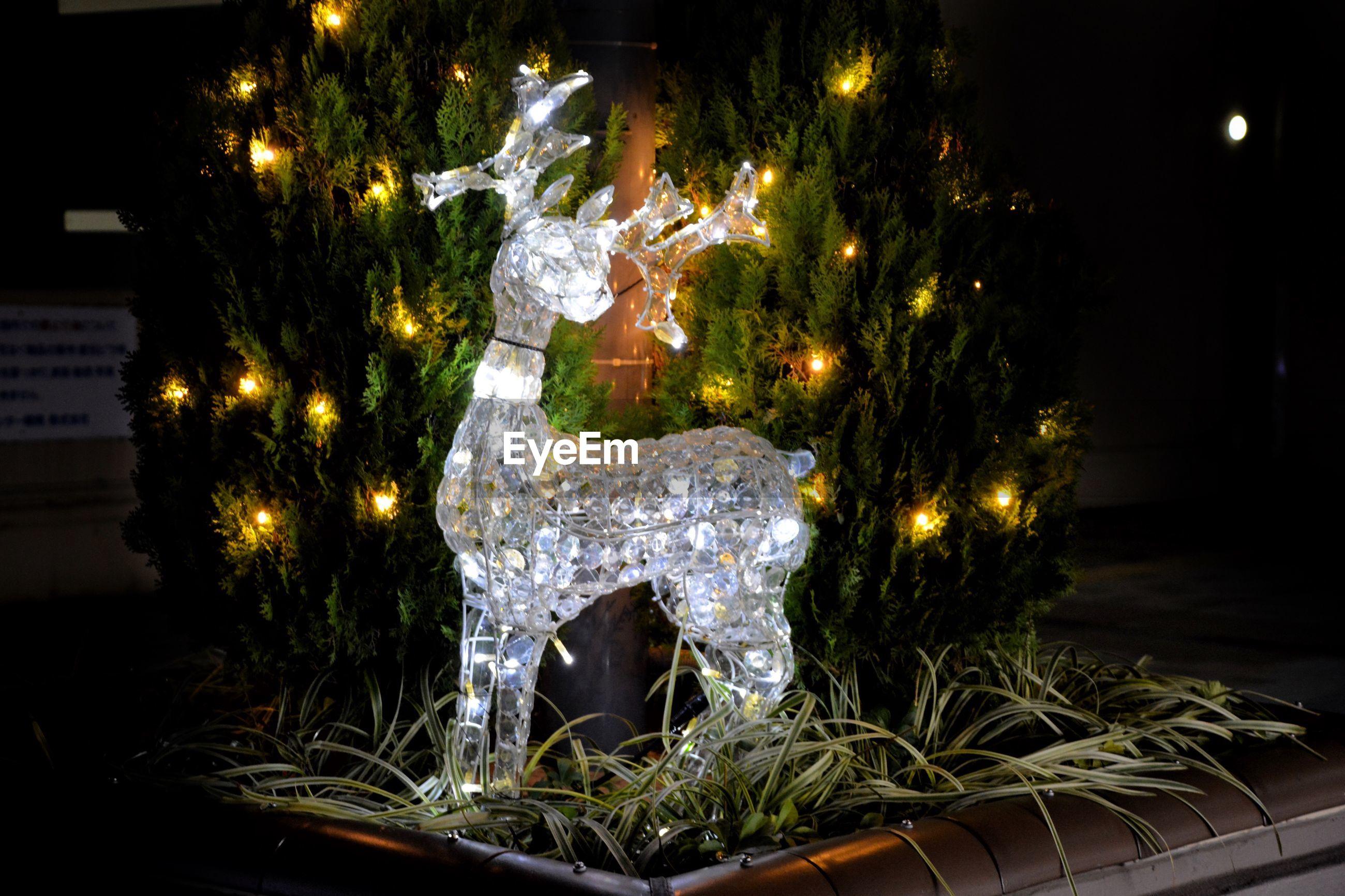 View of illuminated christmas tree at night