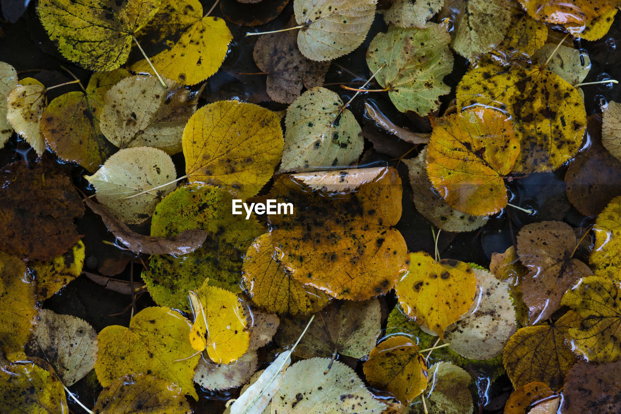 day, leaf, outdoors, close-up, nature, no people, fragility, autumn, yellow, freshness, beauty in nature, water