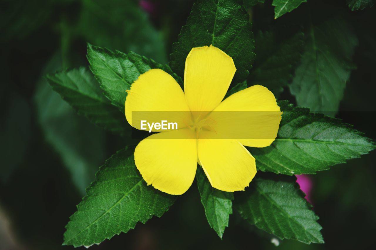 flowering plant, flower, plant, yellow, inflorescence, flower head, petal, beauty in nature, freshness, fragility, vulnerability, plant part, growth, close-up, leaf, nature, no people, green color, day, outdoors