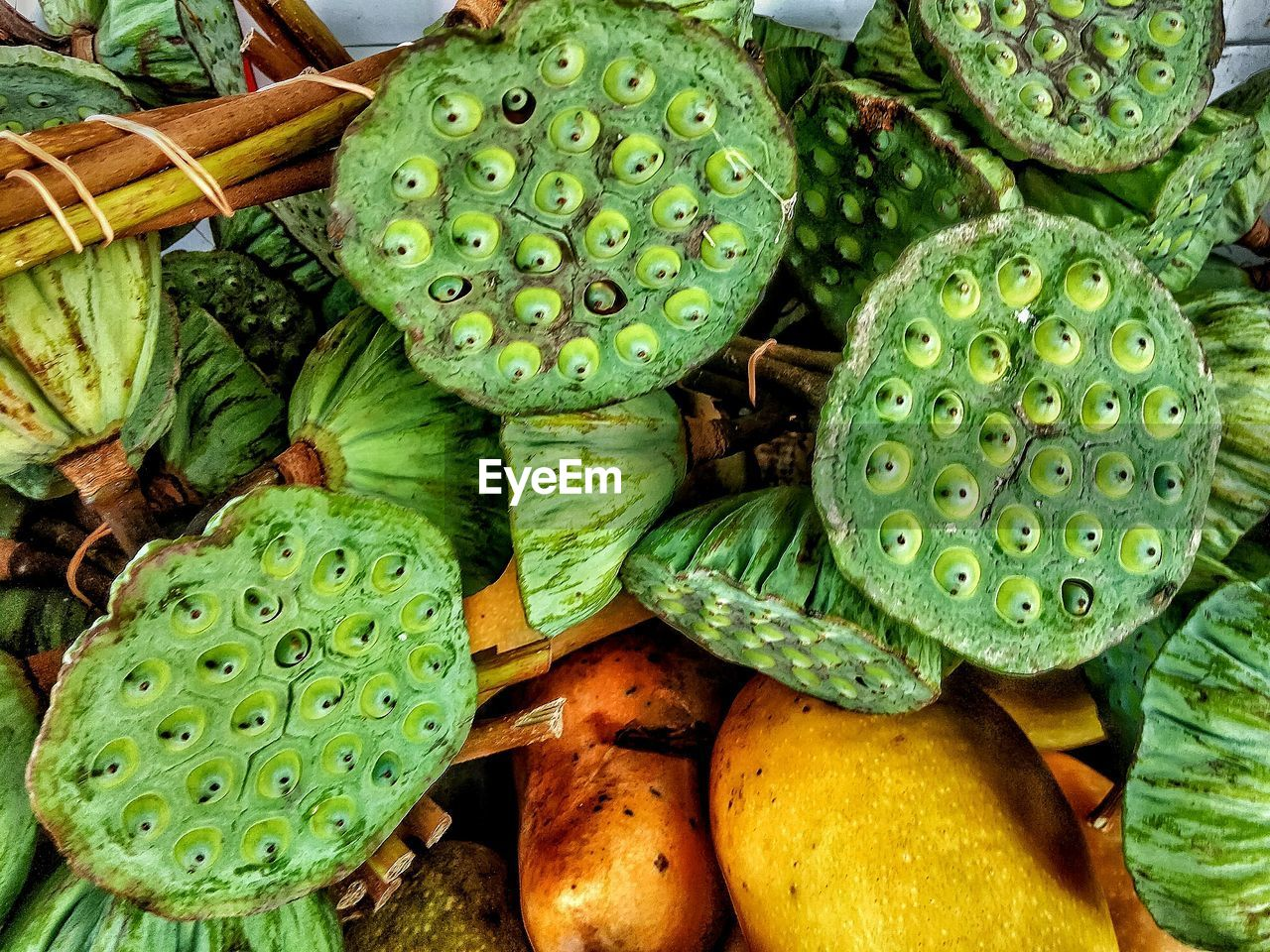 green color, growth, freshness, no people, food and drink, cactus, day, fruit, food, healthy eating, nature, close-up, outdoors, leaf, prickly pear cactus, beauty in nature