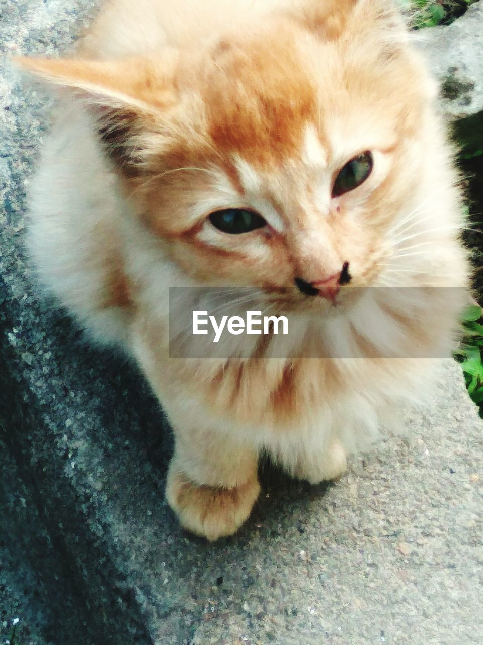 domestic, pets, mammal, domestic animals, cat, one animal, domestic cat, feline, portrait, vertebrate, looking at camera, no people, close-up, day, whisker, high angle view, outdoors, ginger cat, animal eye