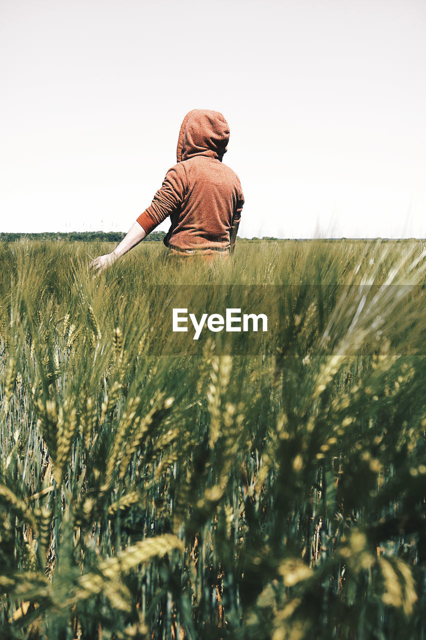 Rear View Of Person Standing In Wheat Field Against Clear Sky
