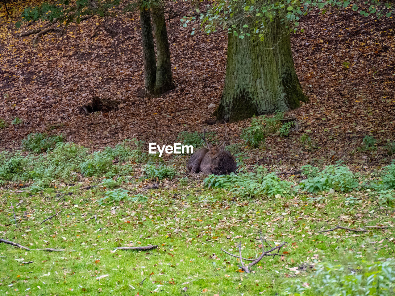 animal themes, animal, one animal, animal wildlife, mammal, animals in the wild, plant, vertebrate, land, tree, nature, no people, day, green color, field, rodent, grass, forest, outdoors, high angle view