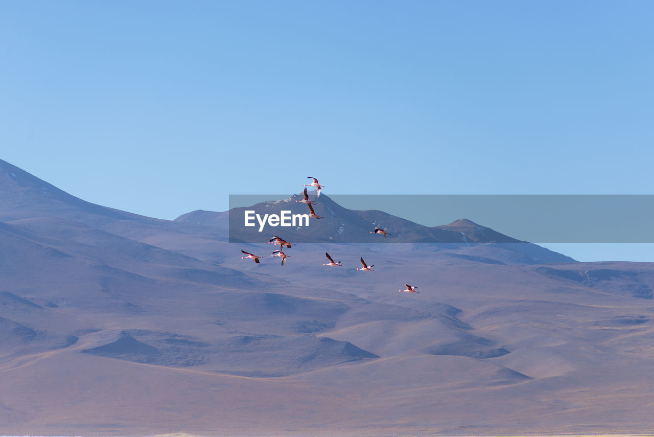 Low Angle View Of Birds Flying Against Mountains