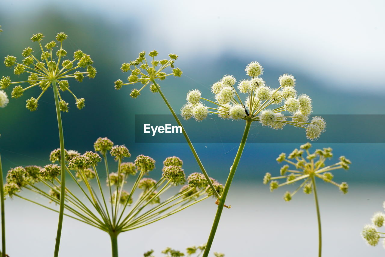 plant, growth, flower, beauty in nature, flowering plant, freshness, fragility, vulnerability, nature, focus on foreground, close-up, sky, no people, plant stem, day, petal, tranquility, flower head, outdoors, inflorescence