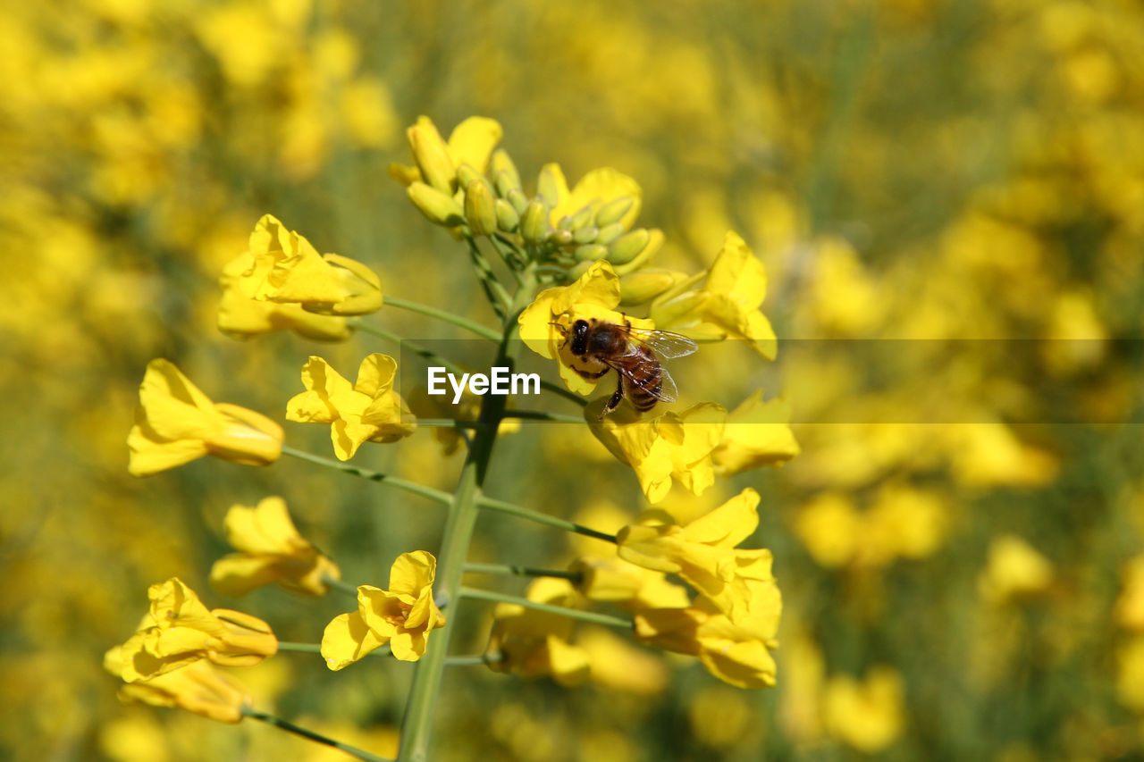 flowering plant, flower, invertebrate, animal themes, plant, insect, animal, beauty in nature, animal wildlife, one animal, growth, animals in the wild, fragility, yellow, vulnerability, freshness, petal, close-up, focus on foreground, flower head, pollination, no people, outdoors, pollen