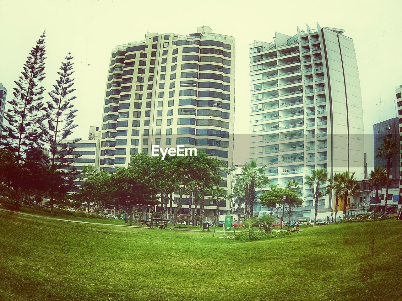 grass, tree, architecture, building exterior, growth, built structure, city, green color, modern, outdoors, skyscraper, no people, day, sky, nature, apartment