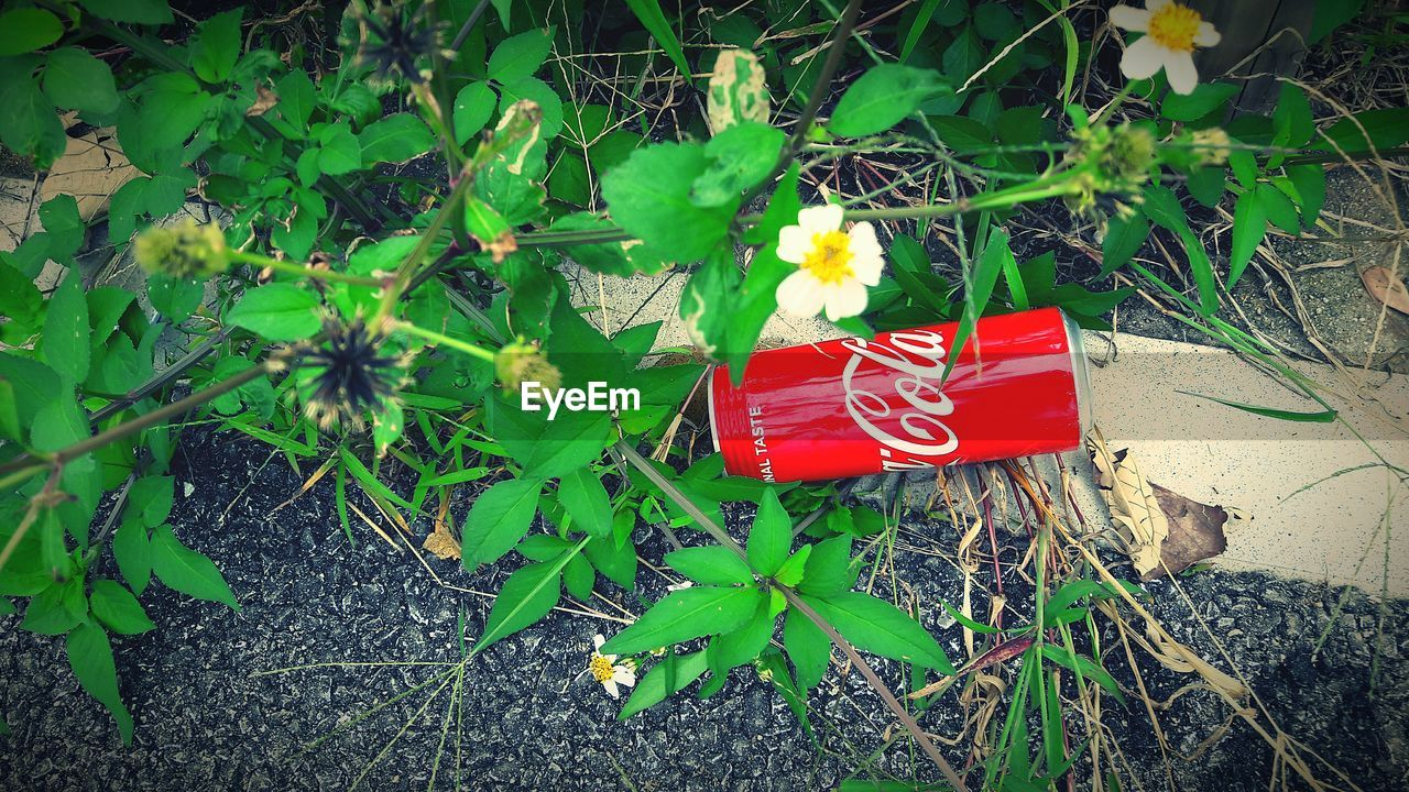 leaf, flower, plant, red, growth, nature, day, green color, no people, outdoors, high angle view, beauty in nature, field, fragility, freshness, flower head, blooming, close-up