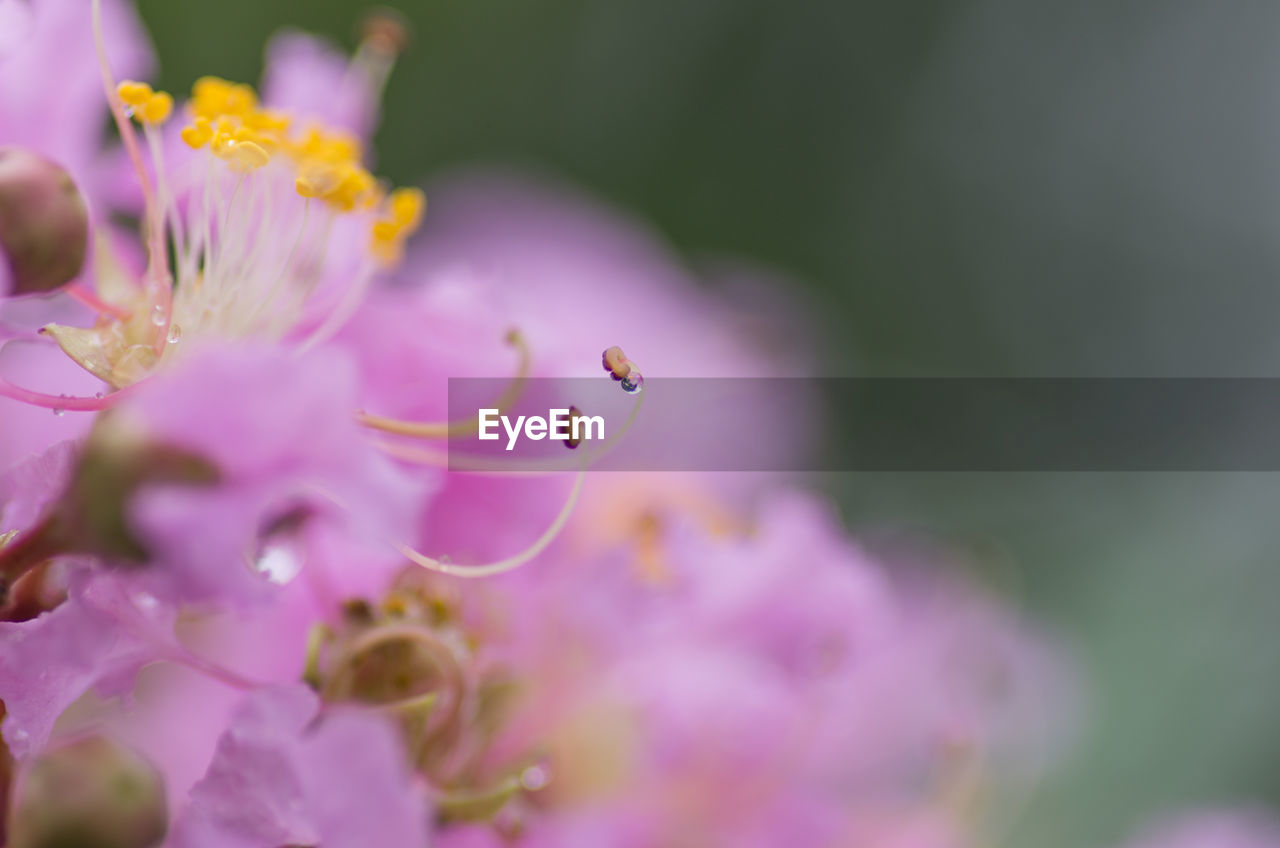 flower, vulnerability, flowering plant, fragility, plant, beauty in nature, growth, freshness, petal, close-up, selective focus, pink color, flower head, nature, inflorescence, no people, purple, day, animal, animal themes, pollination