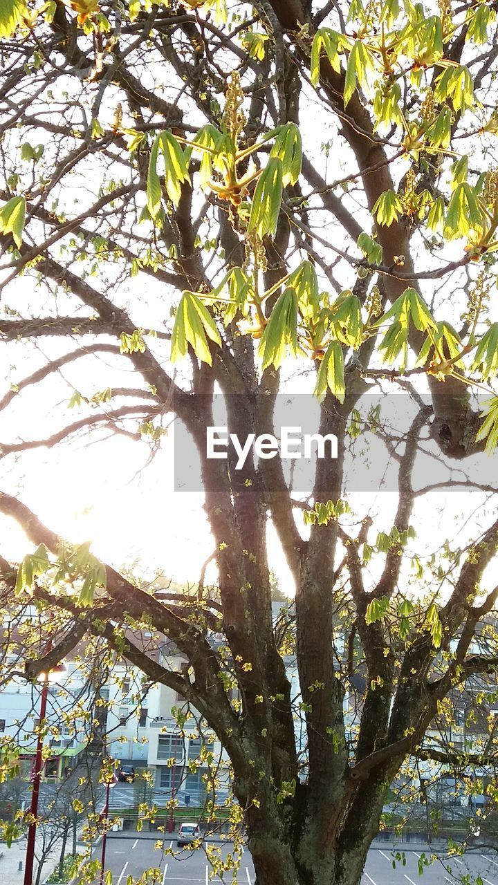 tree, growth, branch, low angle view, day, sunlight, nature, no people, tree trunk, outdoors, green color, leaf, tranquility, beauty in nature, close-up, freshness