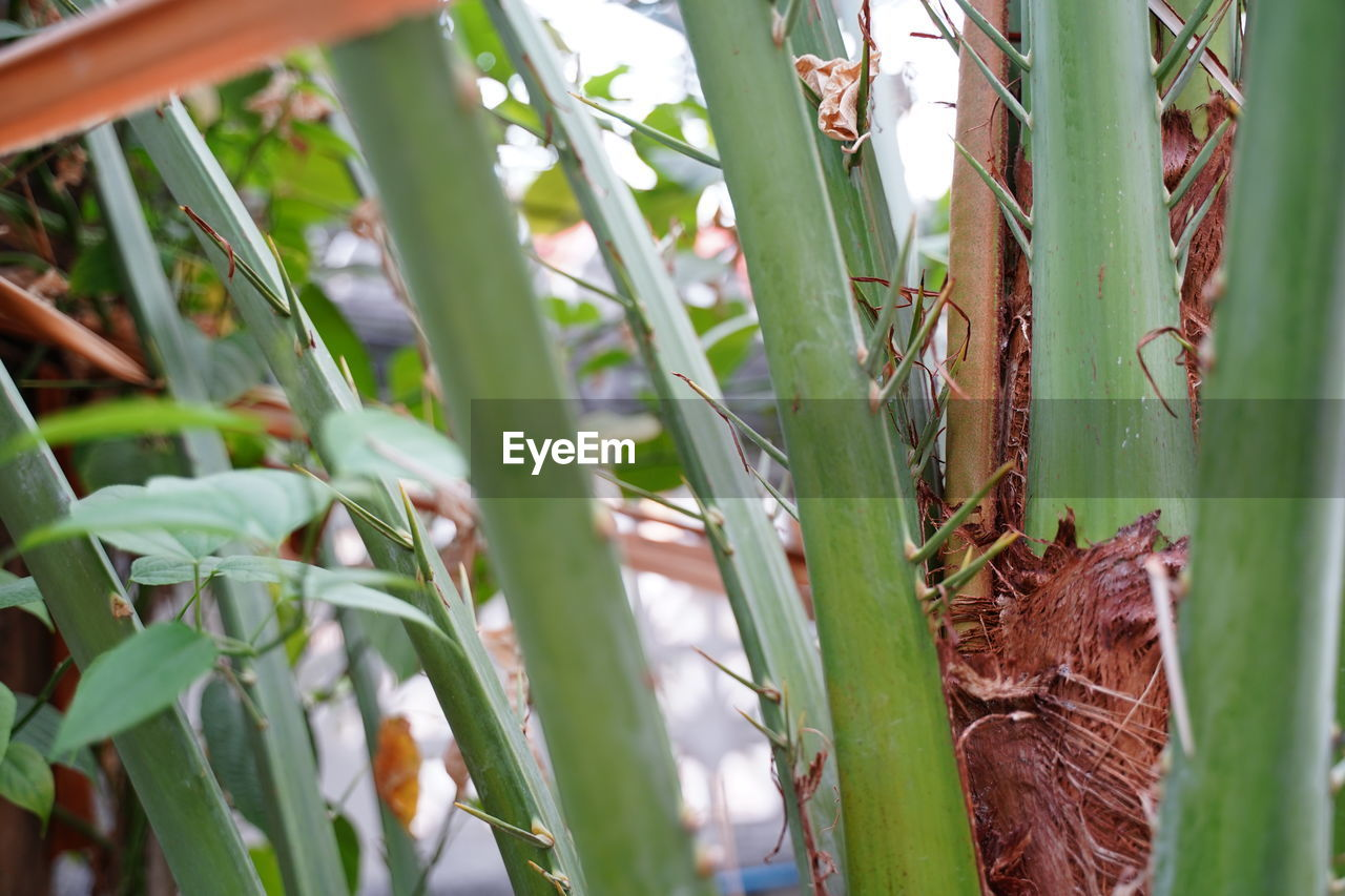 plant, growth, animal themes, no people, animal wildlife, nature, green color, day, leaf, plant part, close-up, animals in the wild, animal, one animal, beauty in nature, invertebrate, selective focus, outdoors, insect, tranquility, butterfly - insect, bamboo - plant, blade of grass