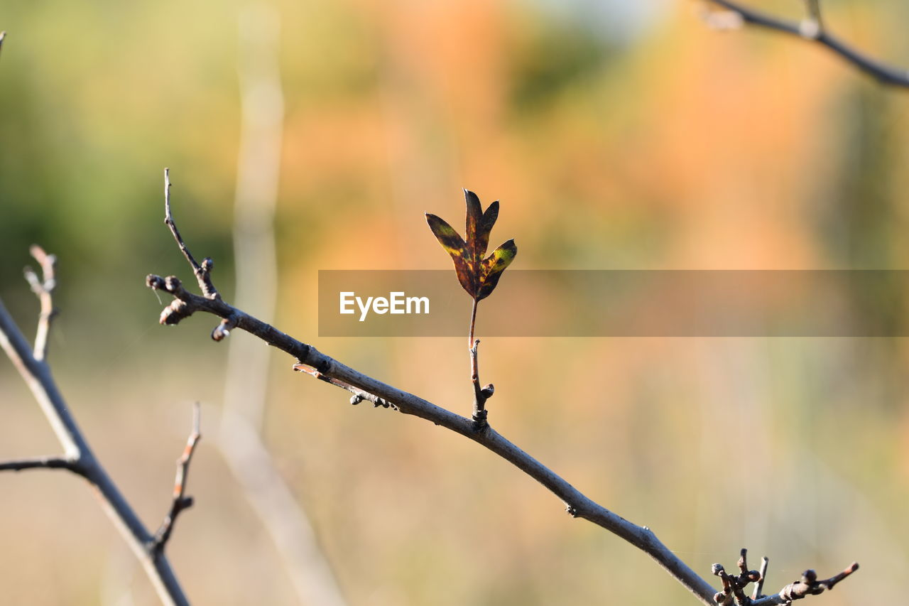 plant, focus on foreground, growth, close-up, beauty in nature, nature, no people, day, plant stem, flower, outdoors, selective focus, vulnerability, fragility, plant part, flowering plant, leaf, branch, tranquility, bud