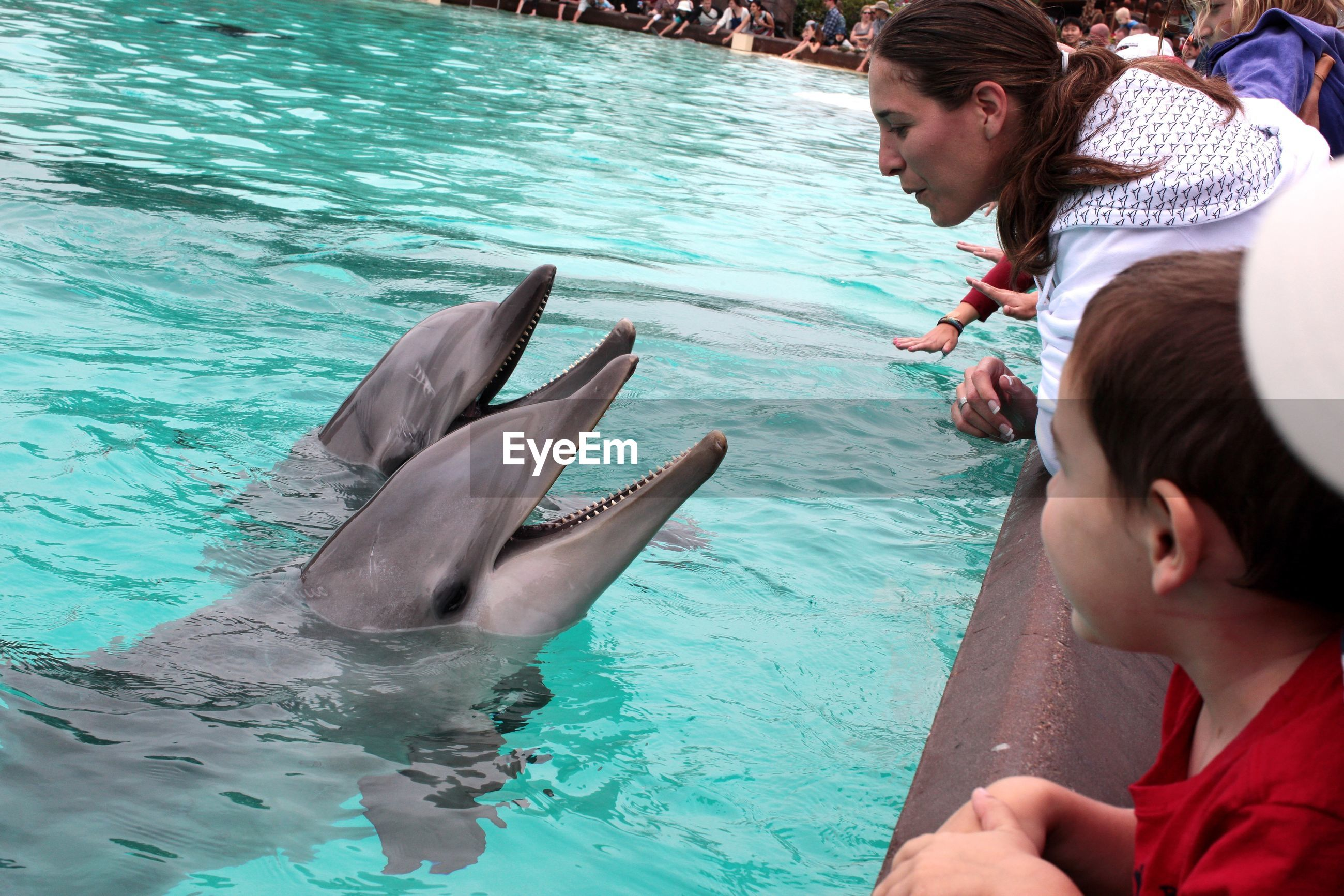 water, underwater, aquatic mammal, animals in the wild, dolphin, animal wildlife, child, real people, animal themes, vertebrate, animal, sea life, sea, marine, one animal, childhood, fish, males, females, outdoors, swimming pool, zoo