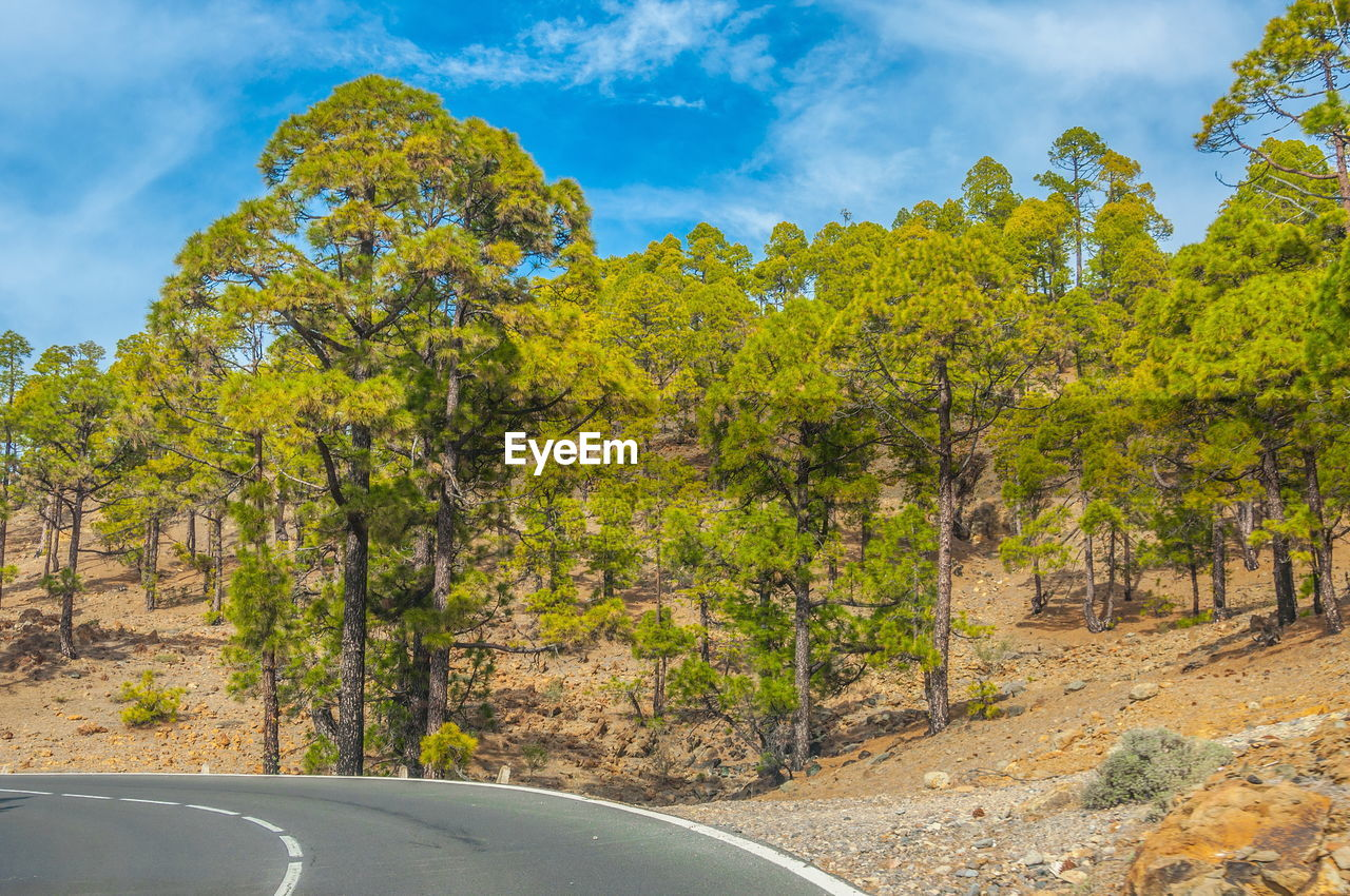 VIEW OF TREES AND YELLOW ROAD AGAINST SKY