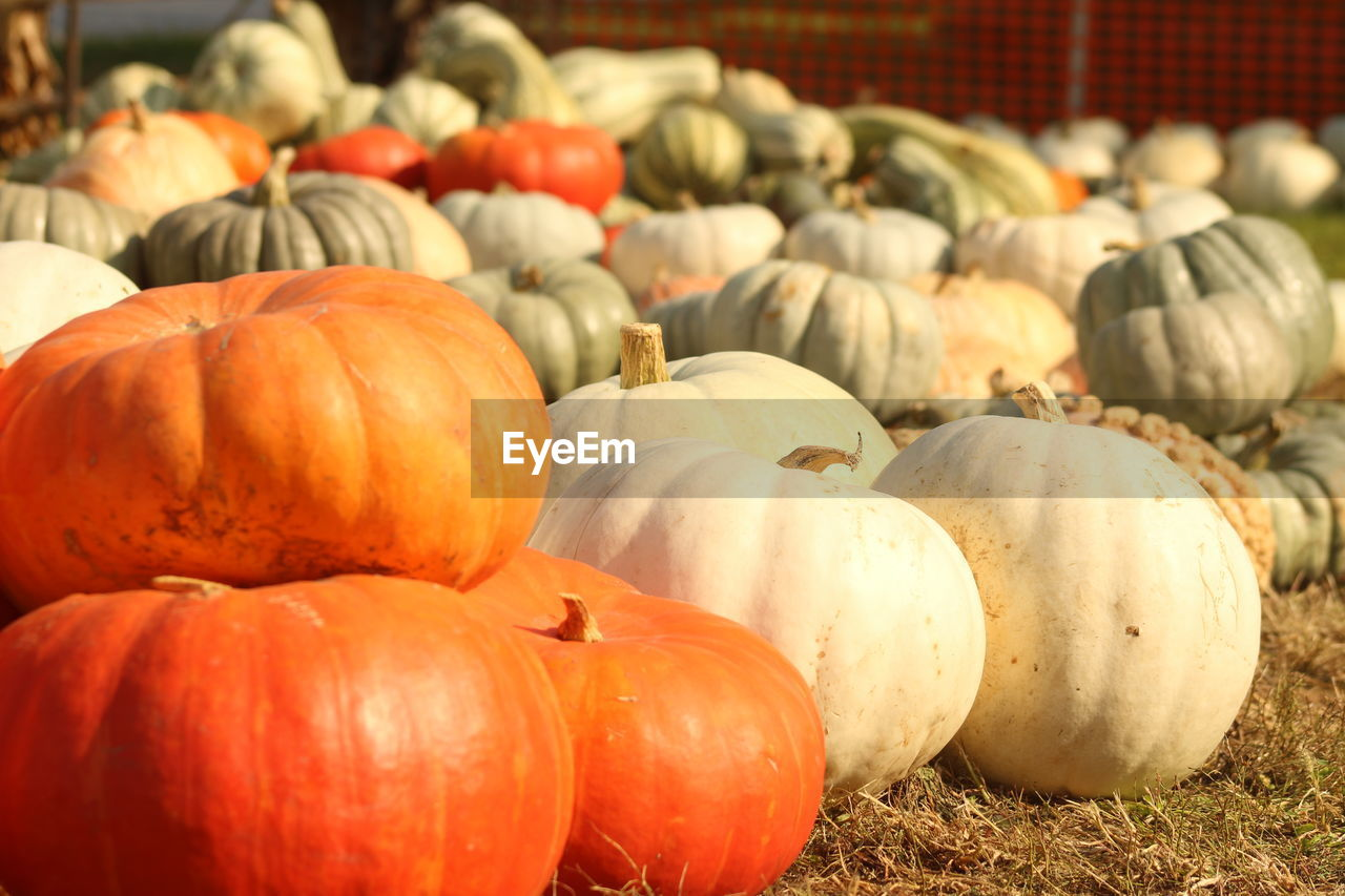 food, pumpkin, food and drink, vegetable, large group of objects, healthy eating, wellbeing, no people, freshness, still life, for sale, abundance, day, market, autumn, halloween, market stall, focus on foreground, agriculture, orange color, organic, outdoors, retail display