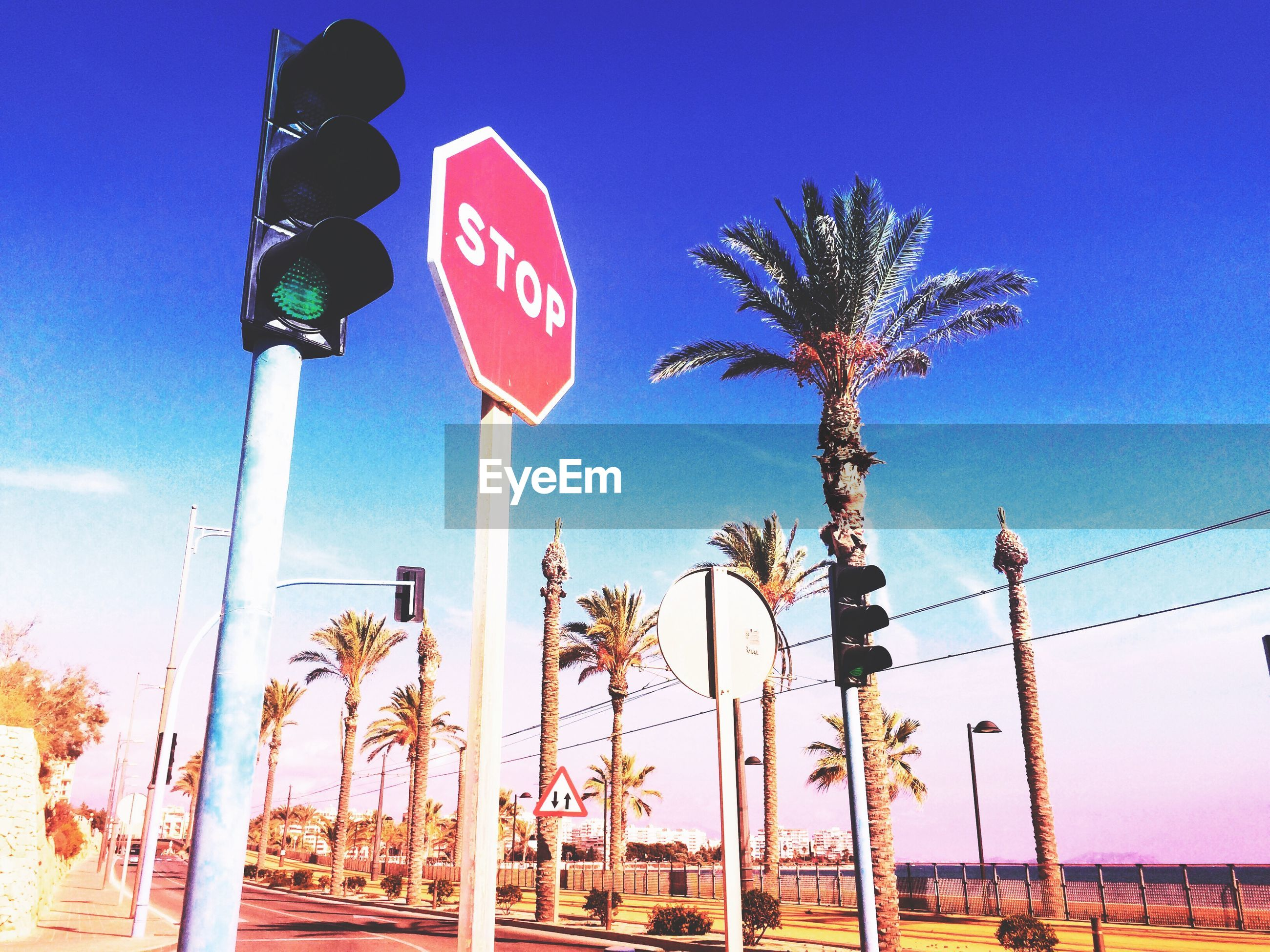 Low angle view of traffic signal and palm trees against blue sky