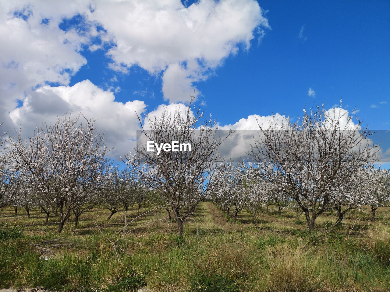 sky, plant, tree, cloud - sky, beauty in nature, tranquility, tranquil scene, land, scenics - nature, no people, day, field, non-urban scene, growth, nature, landscape, environment, blue, grass, low angle view, outdoors